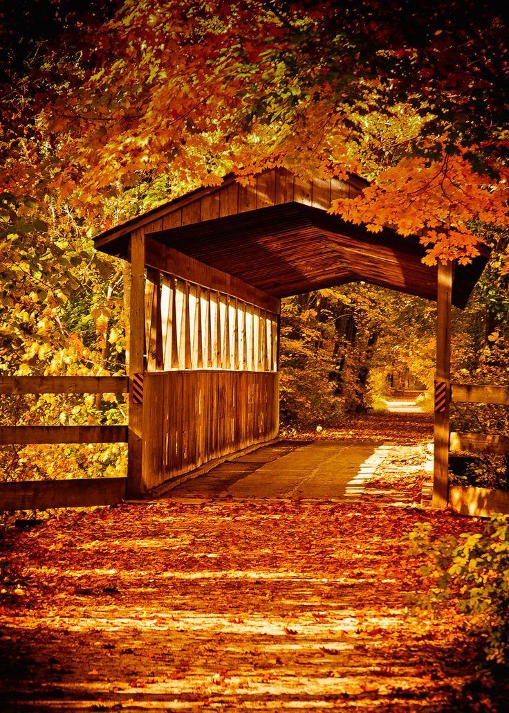 Covered bridge autumn seasons autumn pinterest - Pics of fall scenes ...