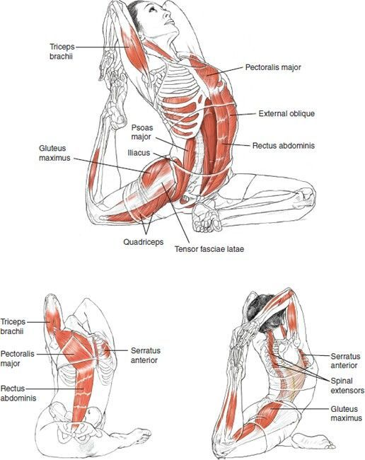 Yoga Anatomy Pigeon Pose With Backbend Yoga Pinterest Pigeon