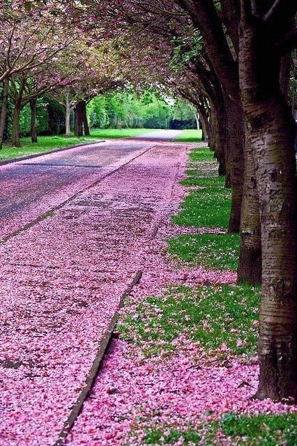 A Pink And Green Spring Blossom Trees Beautiful World Nature Photography