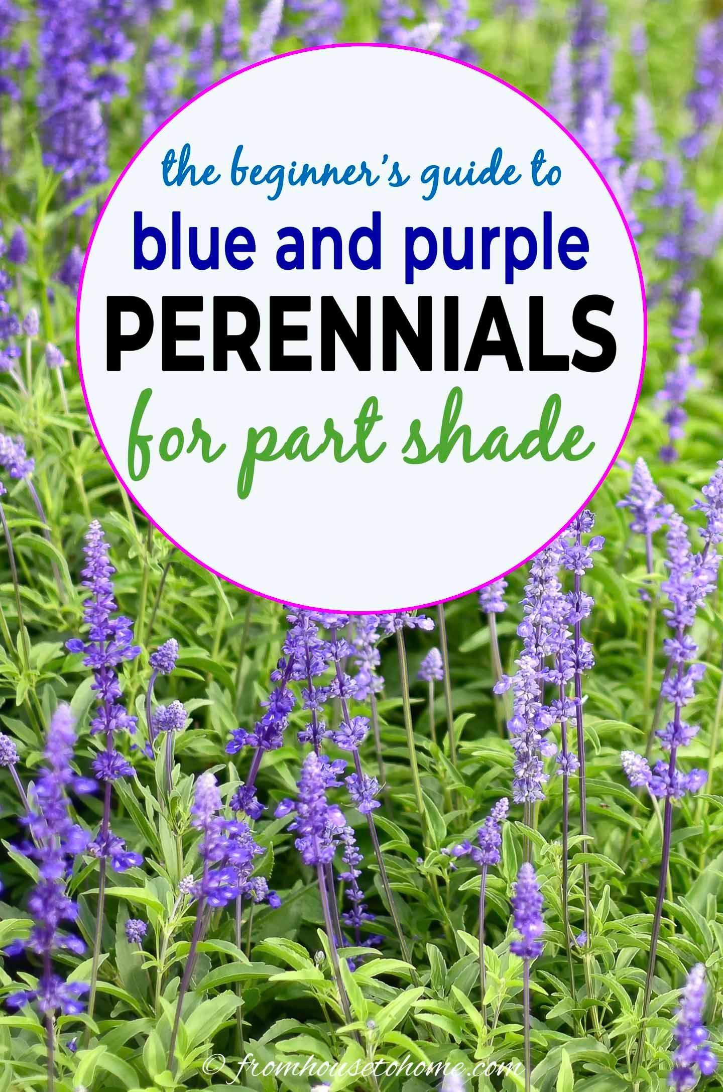 perennial flower seeds for shade