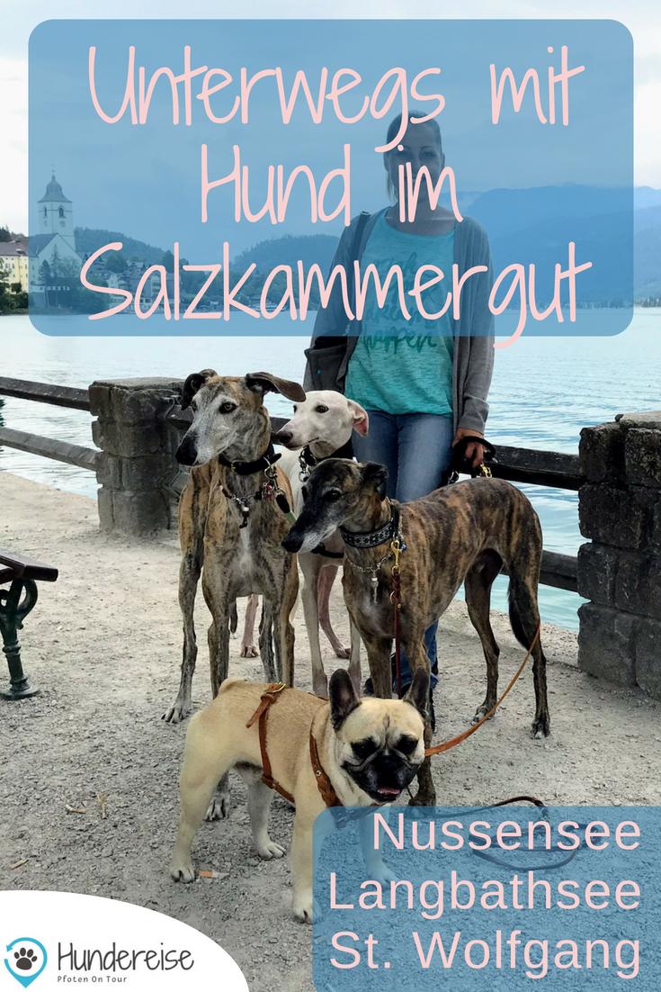Urlaub Hund Salzkammergut See Wanderung Hund Erlaubt Urlaub Mit Hund Salzkammergut Und Urlaub Mit Hund Osterreich