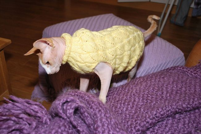 hand knit sweater for sphynx