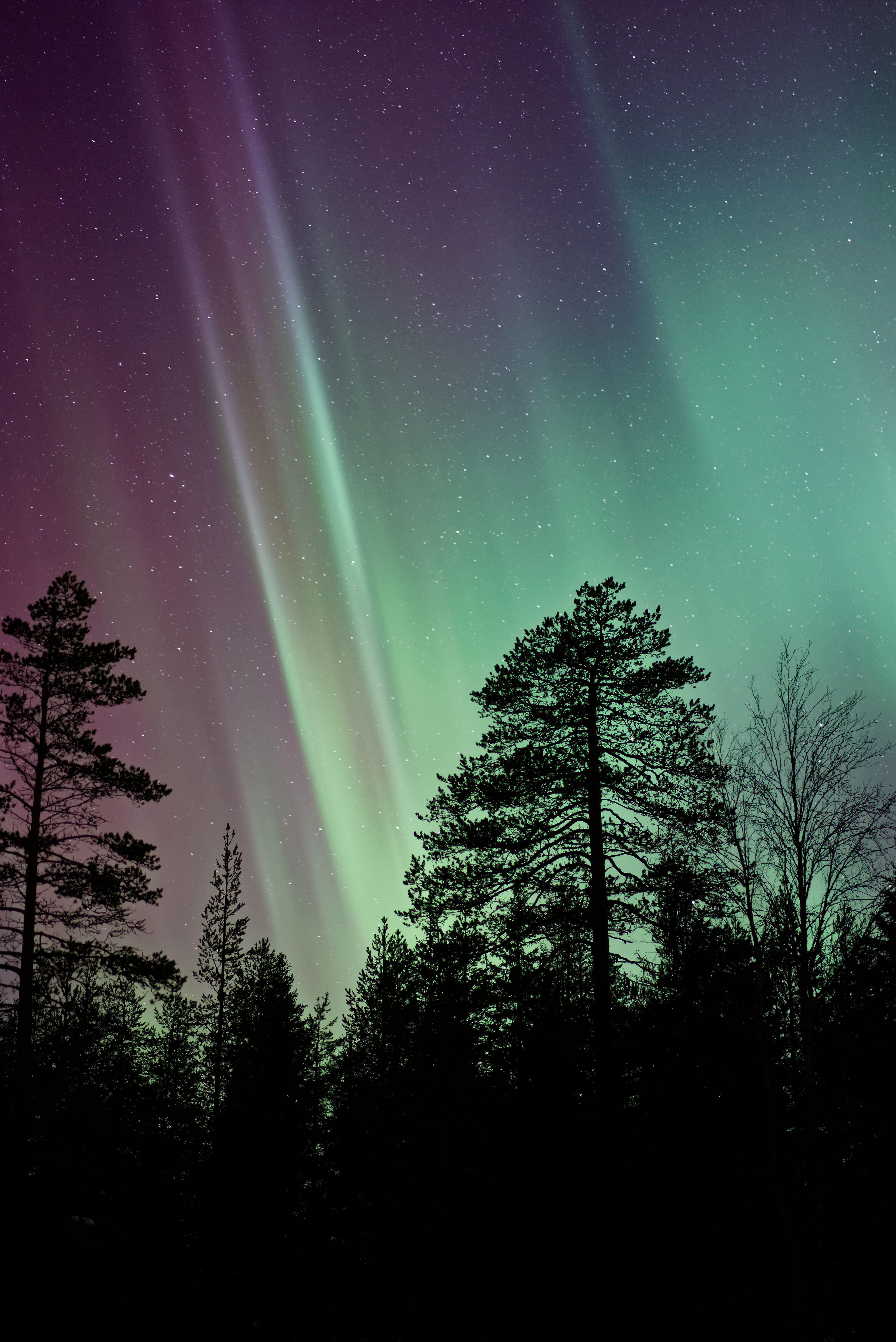 Flott Tree, silhouette, northern light and aurora borealis HD photo by UA-65