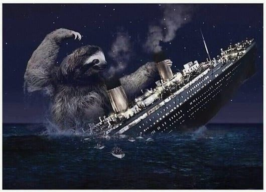 The 25 Greatest Sloths The Internet Has Ever Seen Sloth Titanic