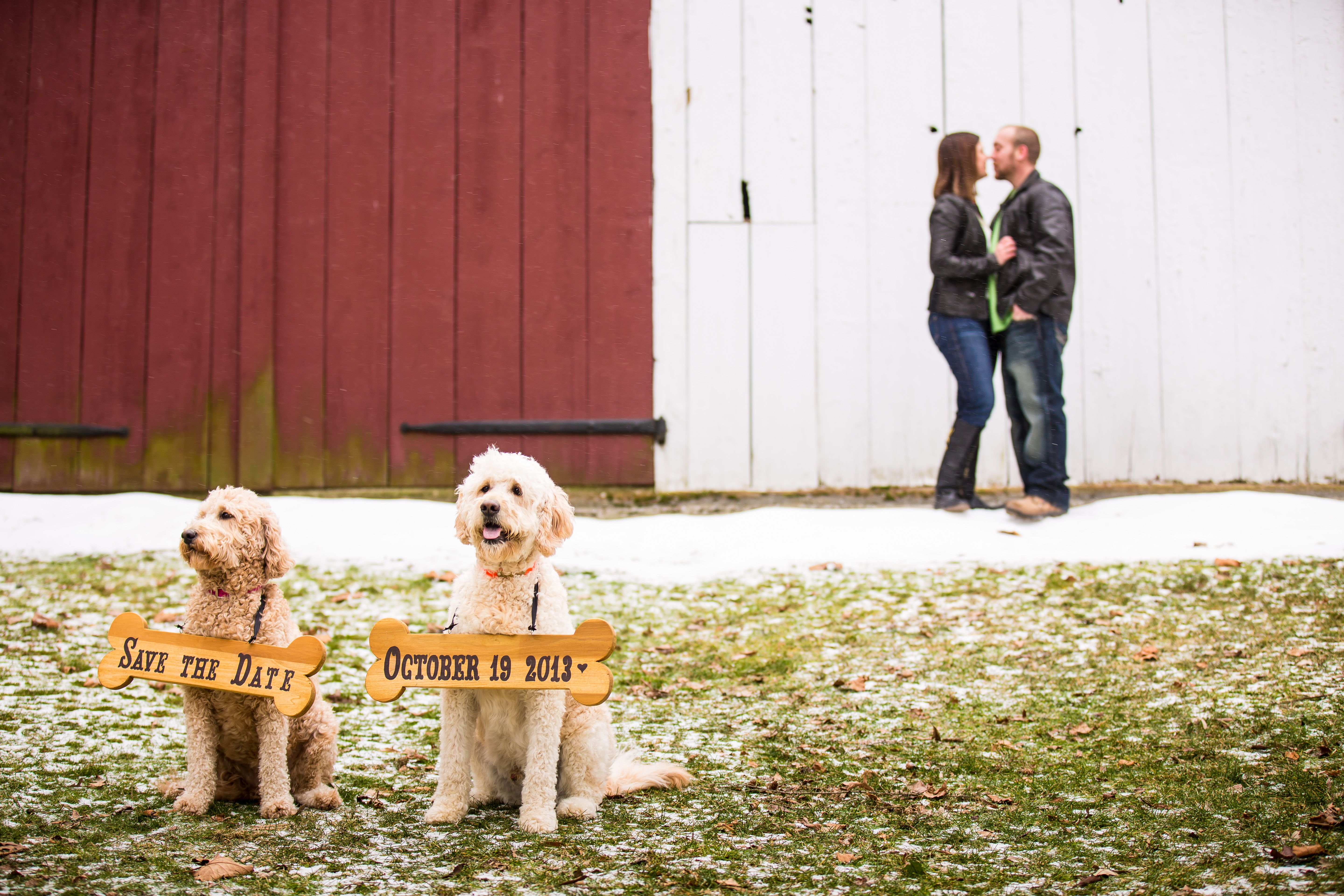 Save the Date with dogs. Photo by Lisa Rhinehart of