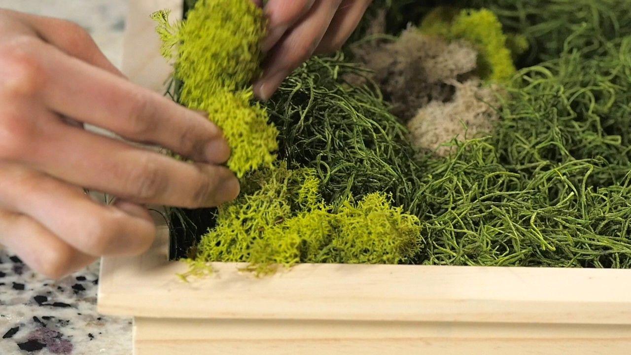 Diy moss board in 2020 moss wall art preserved moss