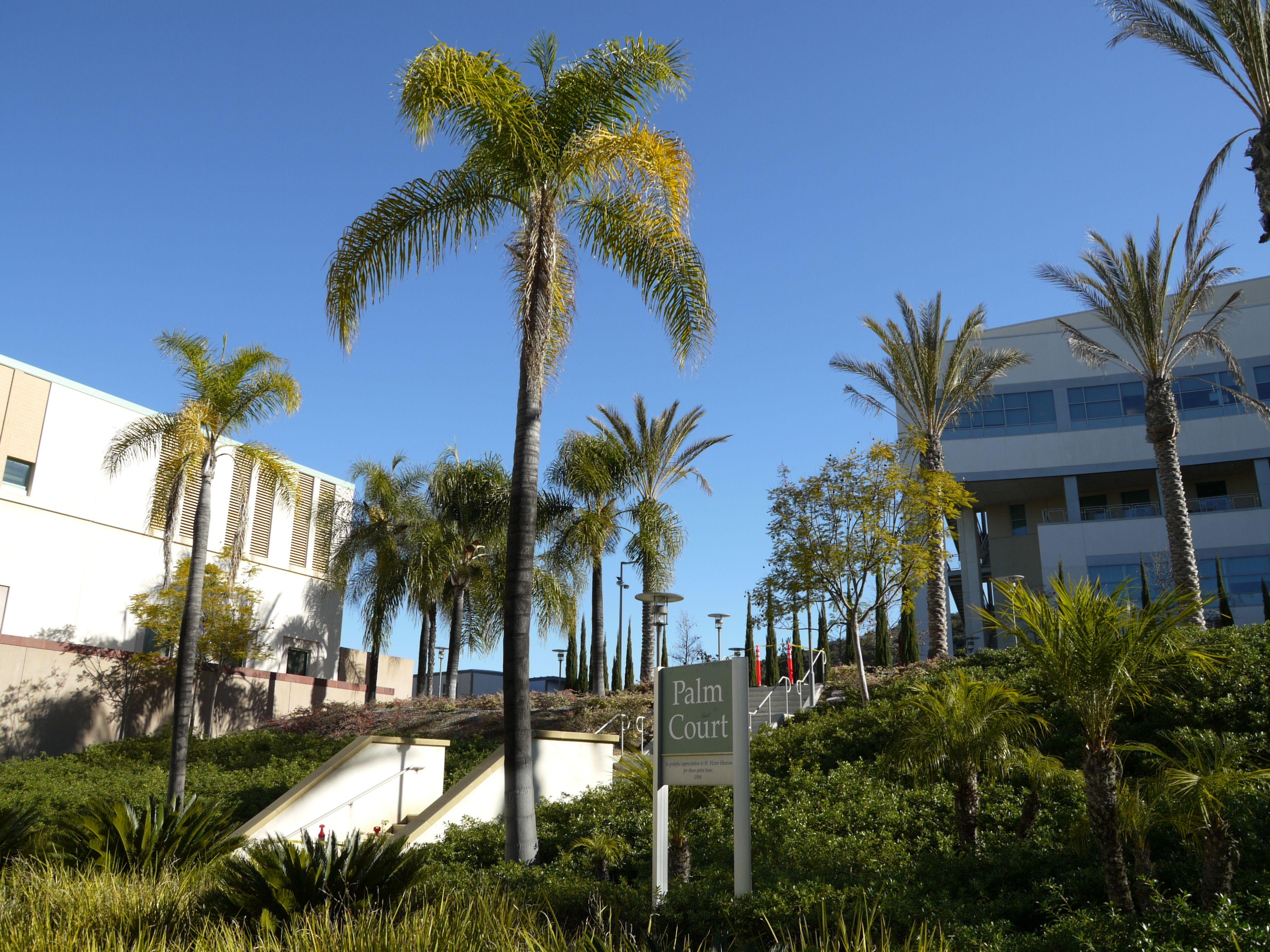 San Marcos College >> Csu San Marcos California Love House Styles College Life