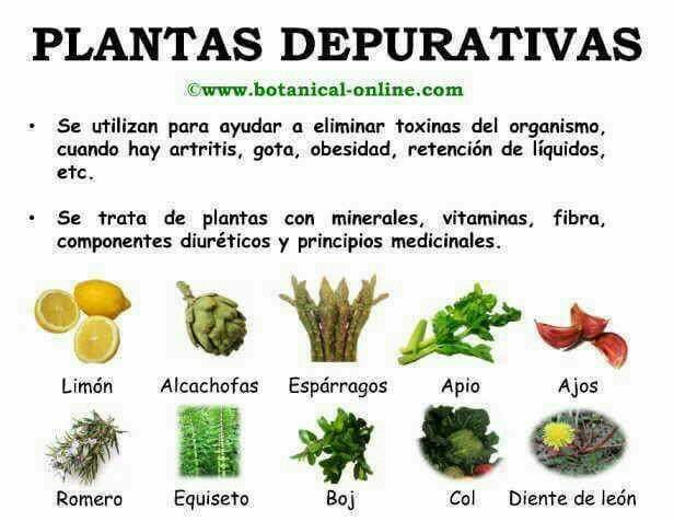 Herbals abortivas