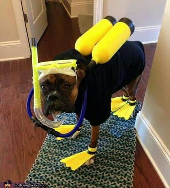 Dog Scuba Costume Easy Diy Pet Halloween Costumes Halloween Animals