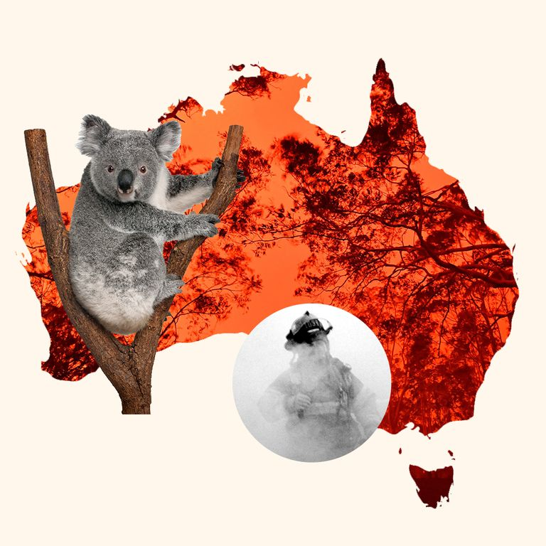 How to Help Koalas, Evacuees, and Firefighters as