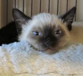 Adopt Mew On Cute Animals Kittens Cutest Kittens