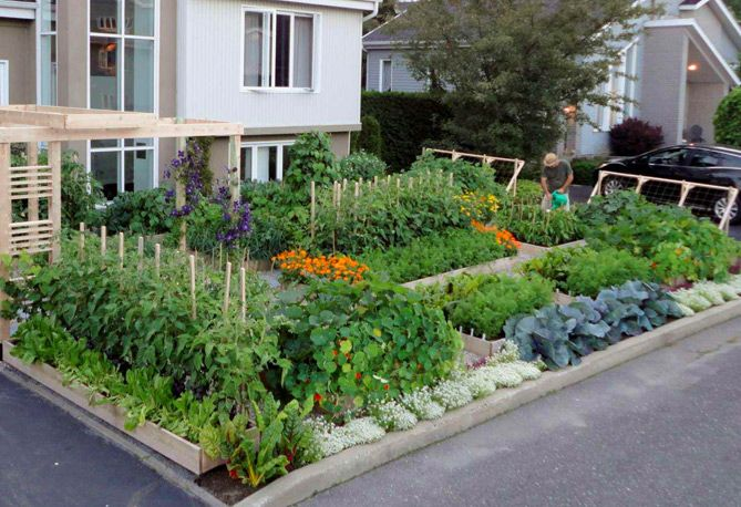 Edible Landscaping Ideas: Design an Urban Vegetable Garden ... on green front yard, sustainable front yard, urban garden balcony, gardening front yard, urban garden office, meadow front yard, urban garden fence, urban back yard, native plants front yard, home front yard, halloween front yard, small pond front yard, perennial border front yard,
