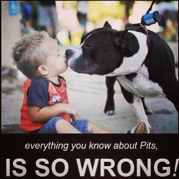Bully D On Twitter Pitbulls Pitbull Terrier American Pitbull Terrier