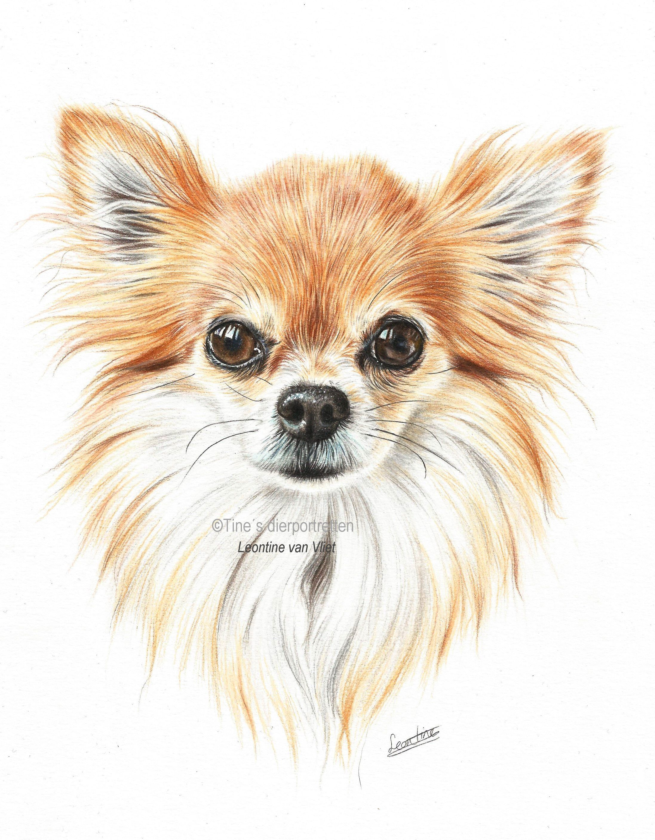 Leontine Van Vliet Is Creating Animal Drawing Tutorials In Colored Pencil And Pastel Patreon Cute Drawings Animal Drawings Animal Art [ 2811 x 2193 Pixel ]