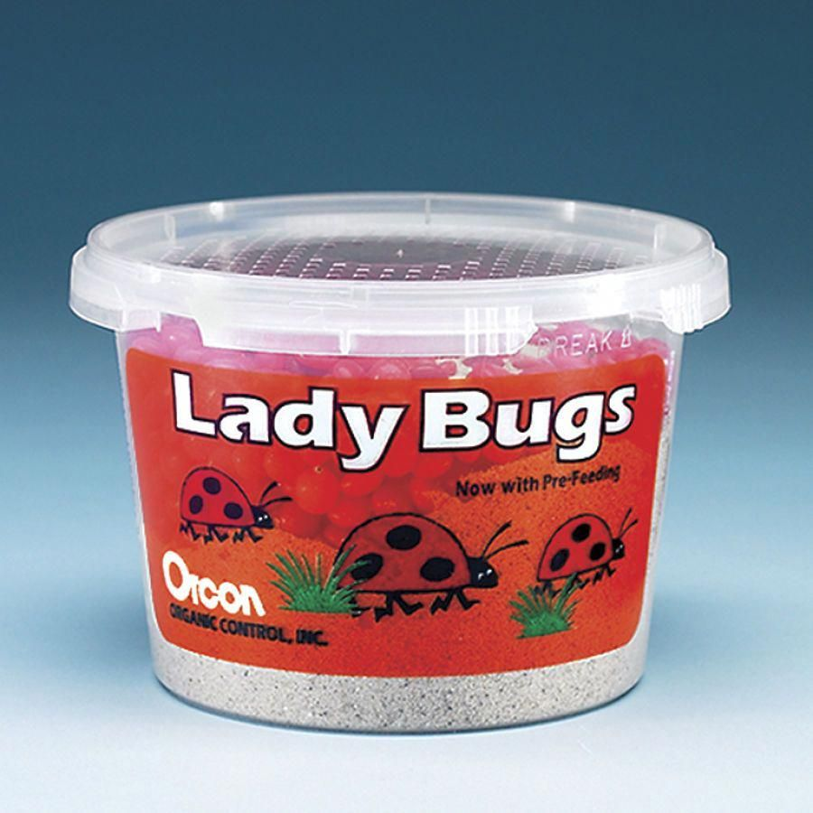500 Live Ladybugs Problem Solvers for Home, Yard, Garden