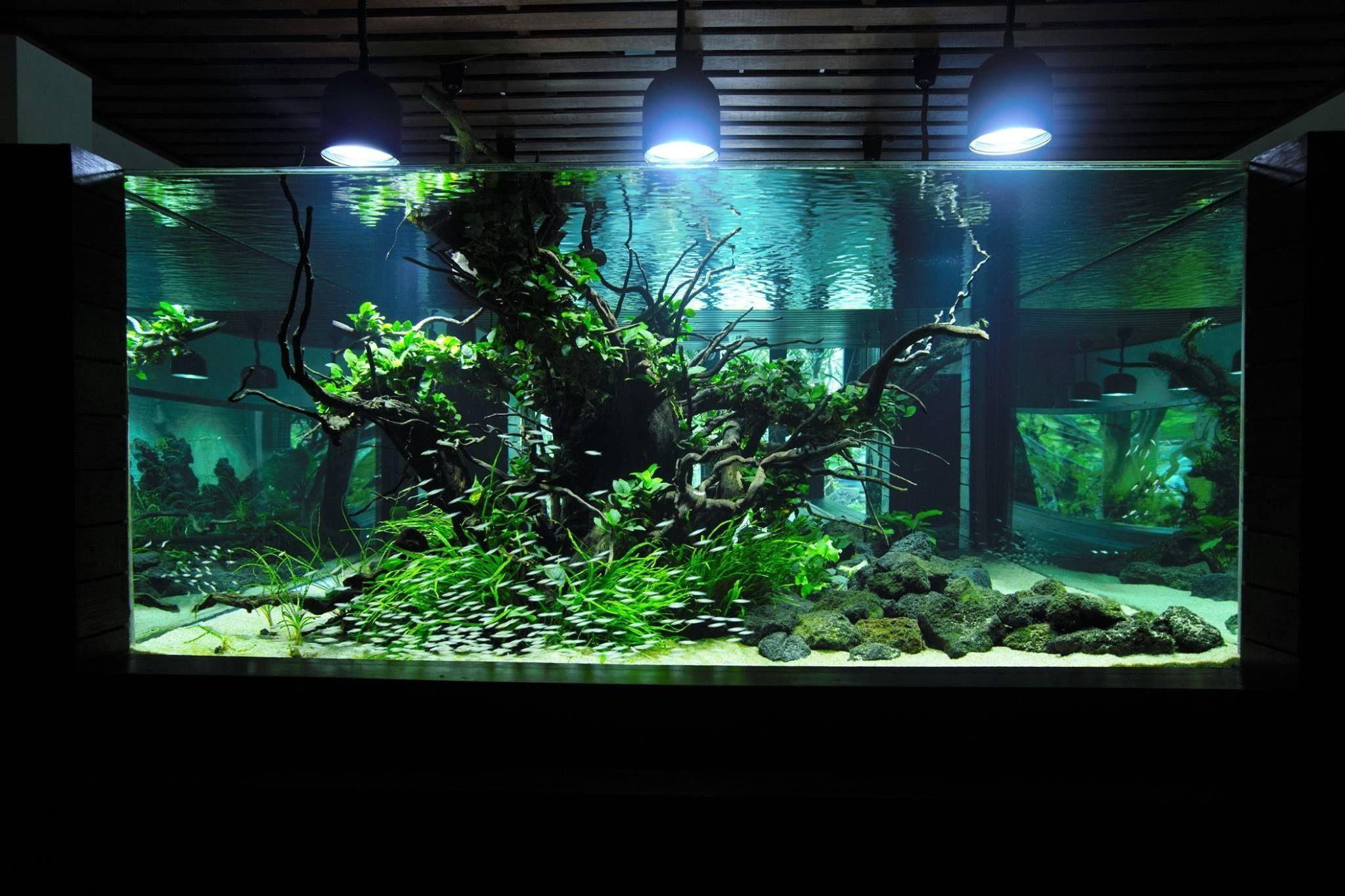 Freshwater Fish Tank Decoration Ideas Best Of Judy Prajitno