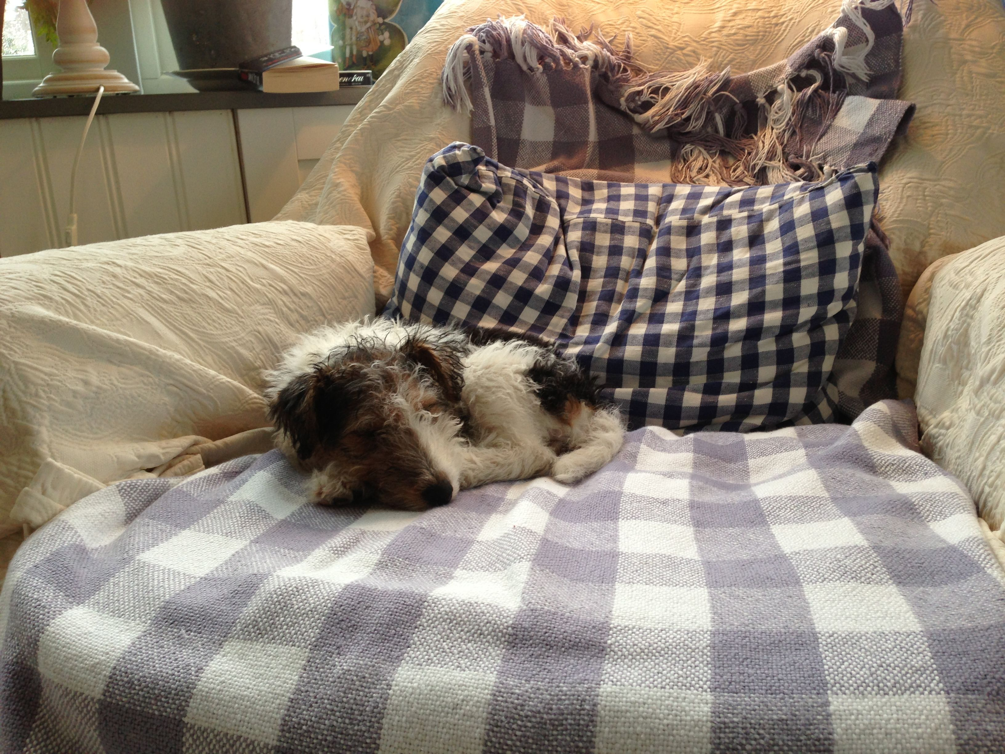 Pin By Kathy Kovic On Smilla The Foxterrier Fox Terrier Bean Bag Chair Cute Dogs