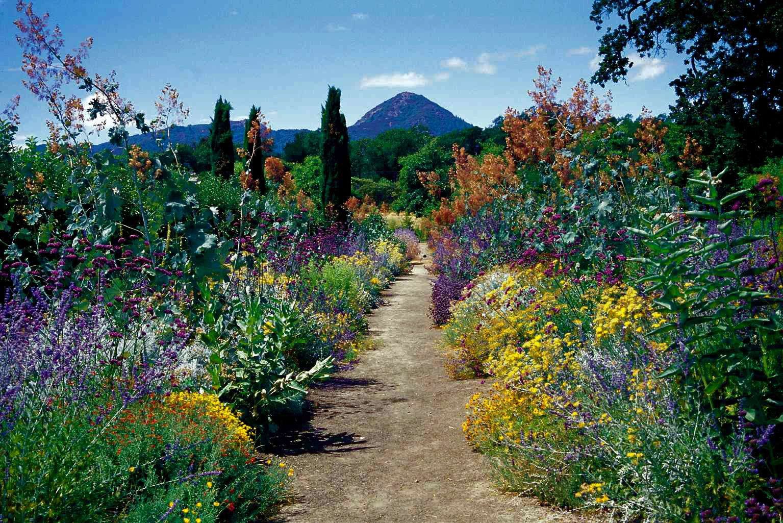 A California style perennial border in July all habitat