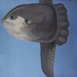 Disc fish on the aquarium wall