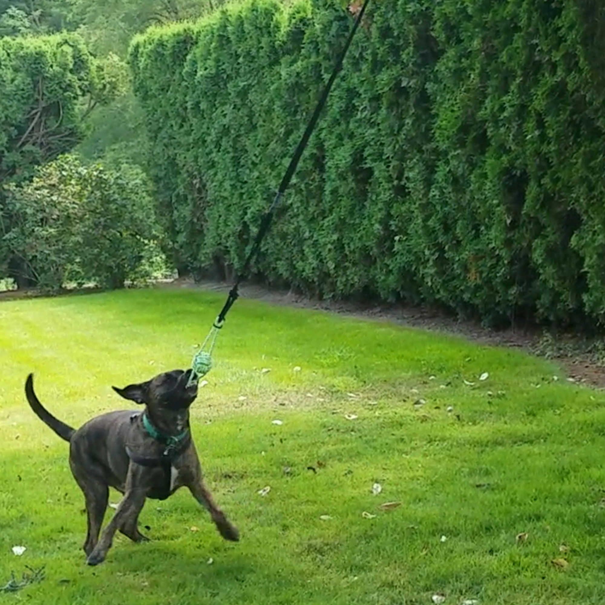 Tumbo Large Ball Knot And Bungee Hanging Dog Toy Dog Toys Dog