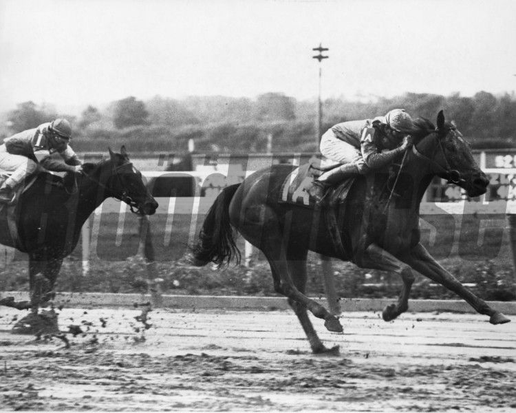 Waya winning the 1979 Beldame Stakes (photo: Bob Coglianese)