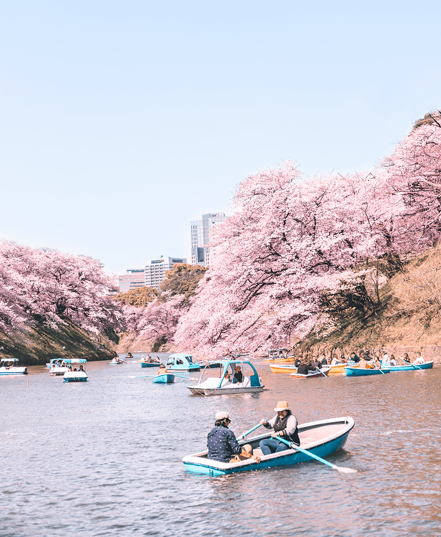 5 Best Places To Experience Tokyo S Magical Sakura Blossoms Dame Traveler Sakura Adventure Is Out There Tokyo