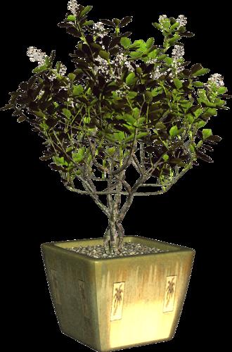 ЦВЕТЫ В ГОРШКАХ-2 -   13 table plants Png ideas