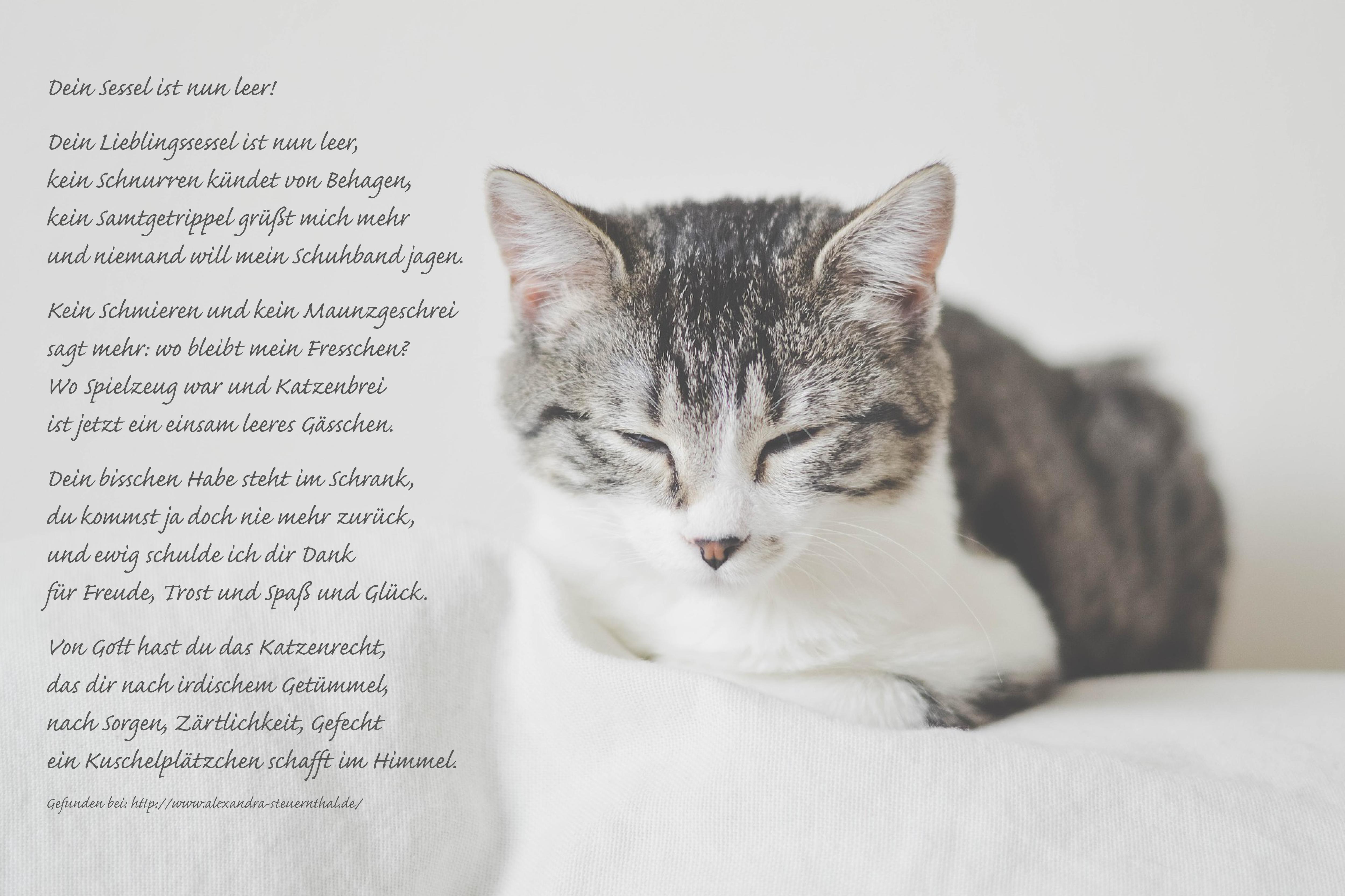 Dein Lieblingssessel Ist Nun Leer Trauergedicht Anubis Tierbestattung Spruch Katze Haustier Erinnerung Katzen Fakten