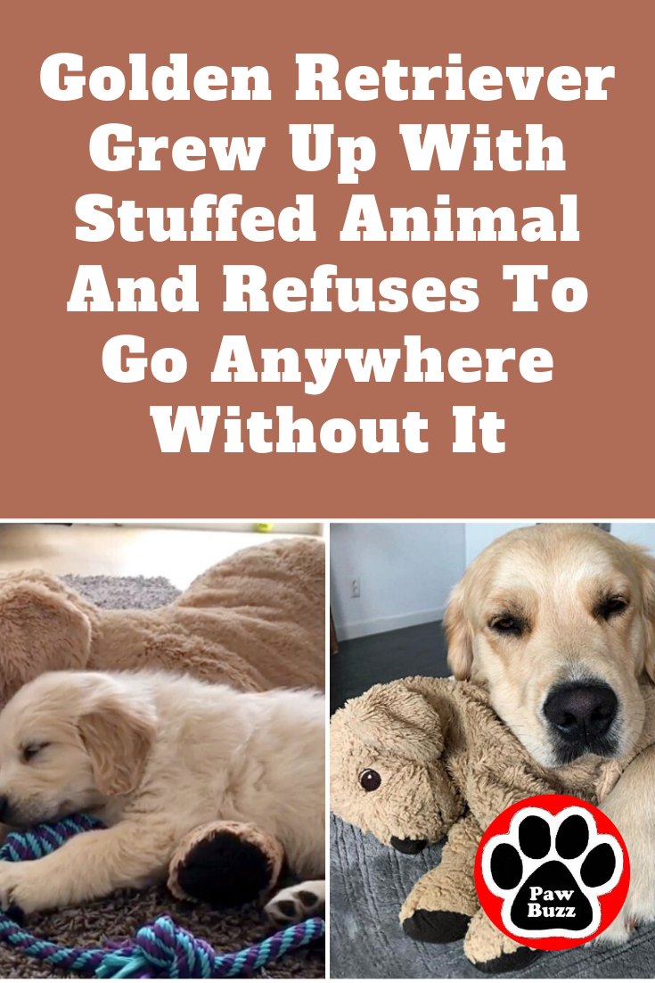 Meet Barley His Mom Got A Stuffed Animal For Him As A Welcome Home Gift When They First Adopted Him But She Never Knew Just In 2020 Golden Retriever Animals Dog Life