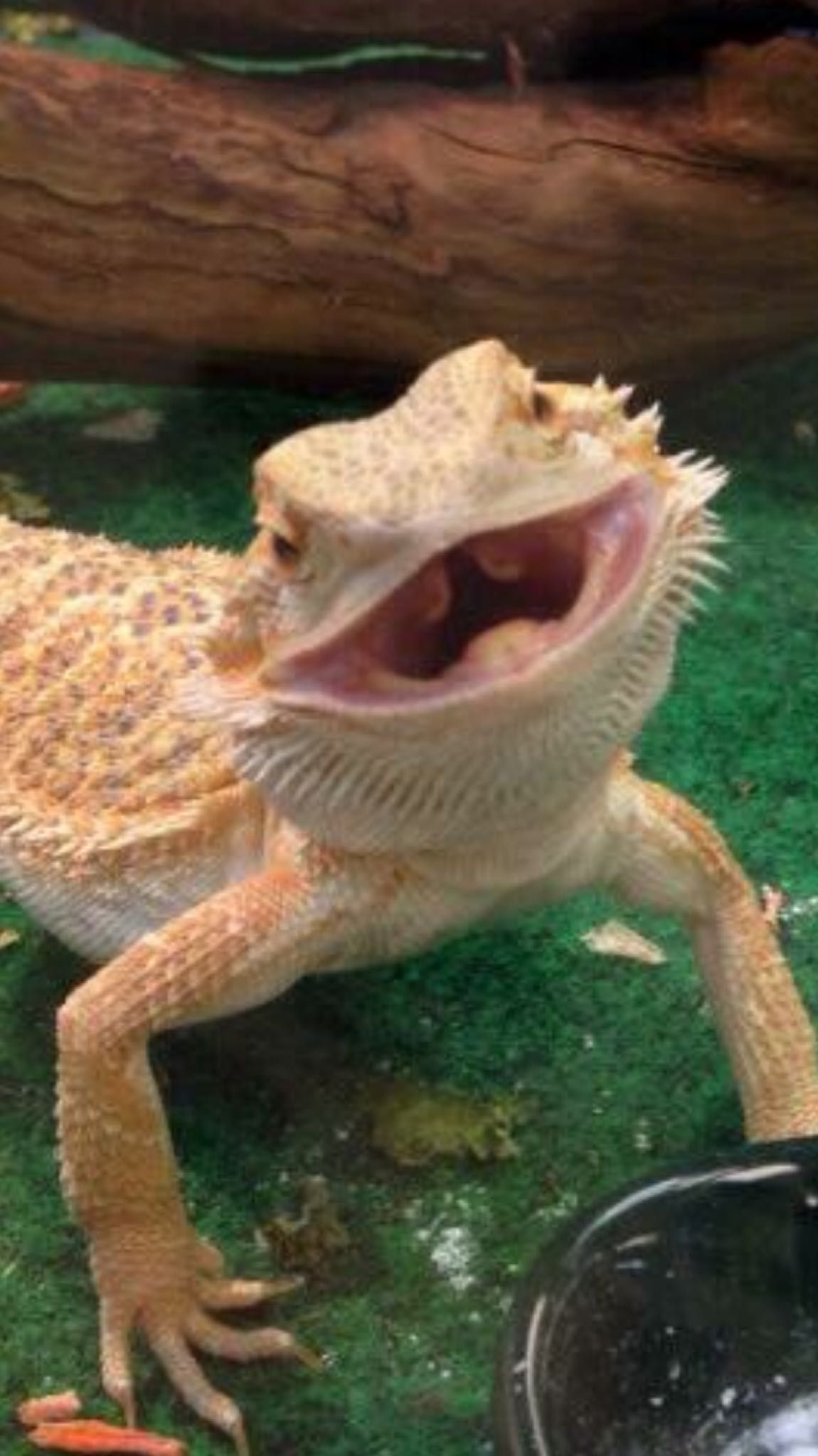 Jim Varney was the best (only) lizard I ever got to know
