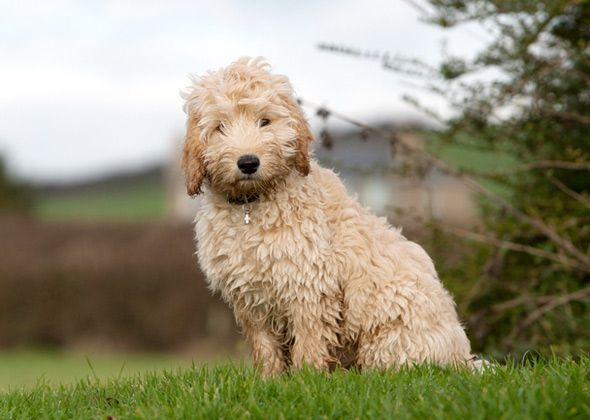 What Are The Best Dogs For First Time Owners Vets Place Their