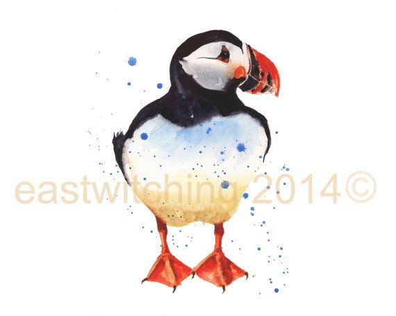 Watercolour PUFFIN Print - 8x10 inches - portrait format - Chesty Clifford    This boastful puffin print will slip easily into any readily available pre-made frames found in supermarkets. Makes framing easy and affordable!    A fresh and playful watercolour puffin print in washes of of black, and orange-scarlet.    This would be a lovely gift for the bird spotter.    I will create your puffin print at home using Epson 190gsm archival watercolour paper.    It gives an authentic look and will…