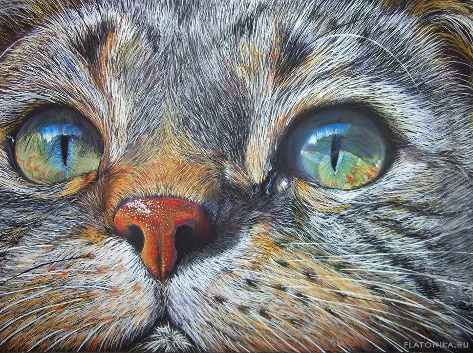 Поздравление к картине с изображением глаз кошки