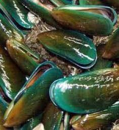 Resultado de imagen para Mejillones de labios verdes