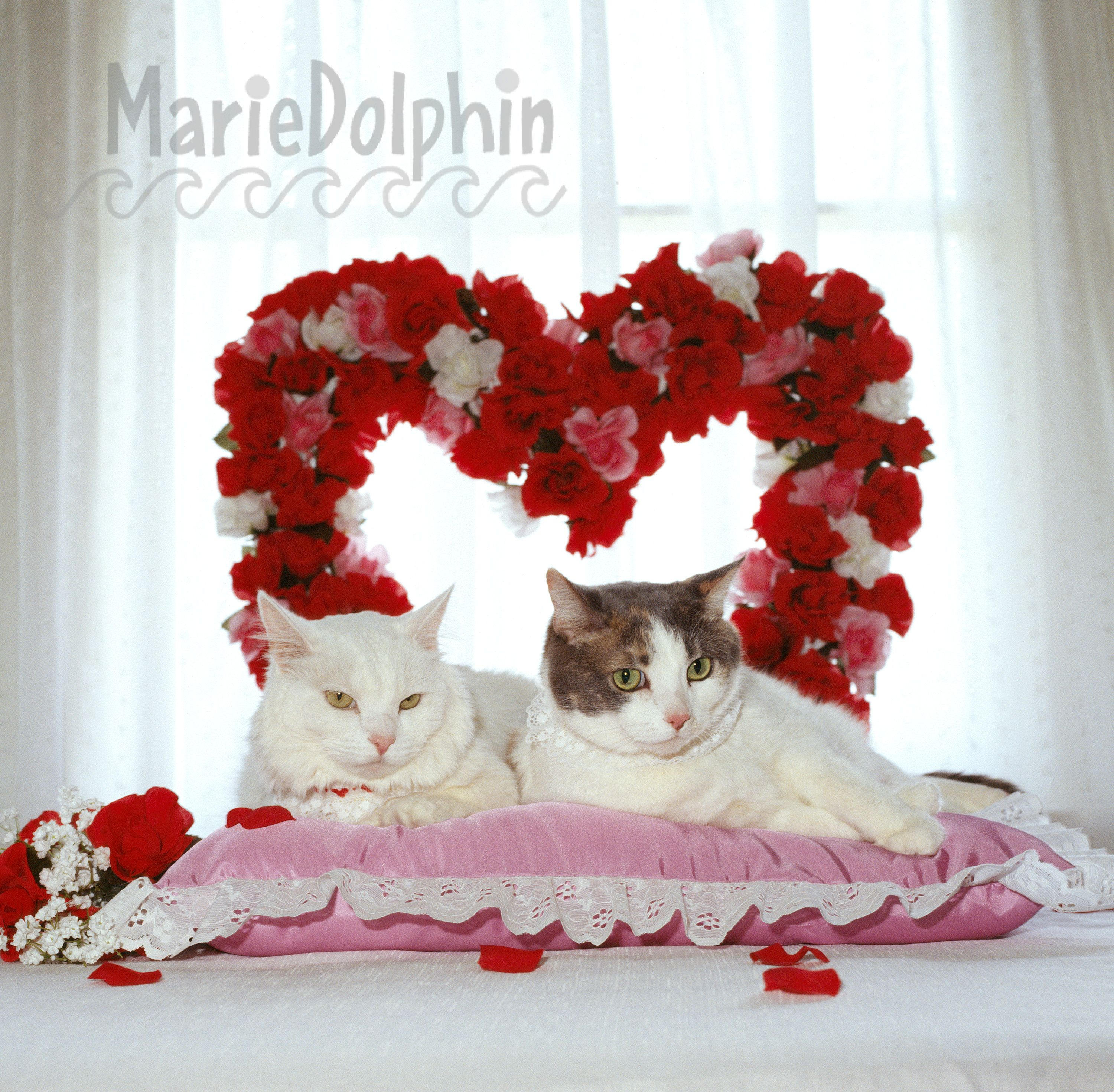 Vintage 1993 Valentines Photograph Used In My Calendar And Etsy In 2020 White Cats Animal Pound Pet Loss Dog