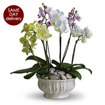 Stand Tall Plant To Usa Orchid Flower Arrangements Orchid Plants Plants