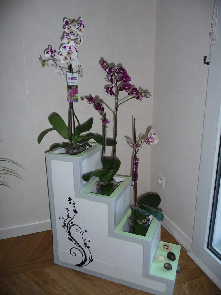 escalier pour orchid es mel pinterest carton. Black Bedroom Furniture Sets. Home Design Ideas