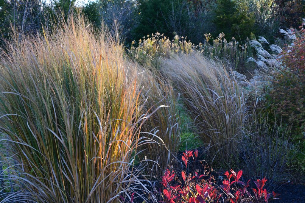 Beautiful grasses in John's MARKOWSKI'S New Jersey Garden | Fine Gardening