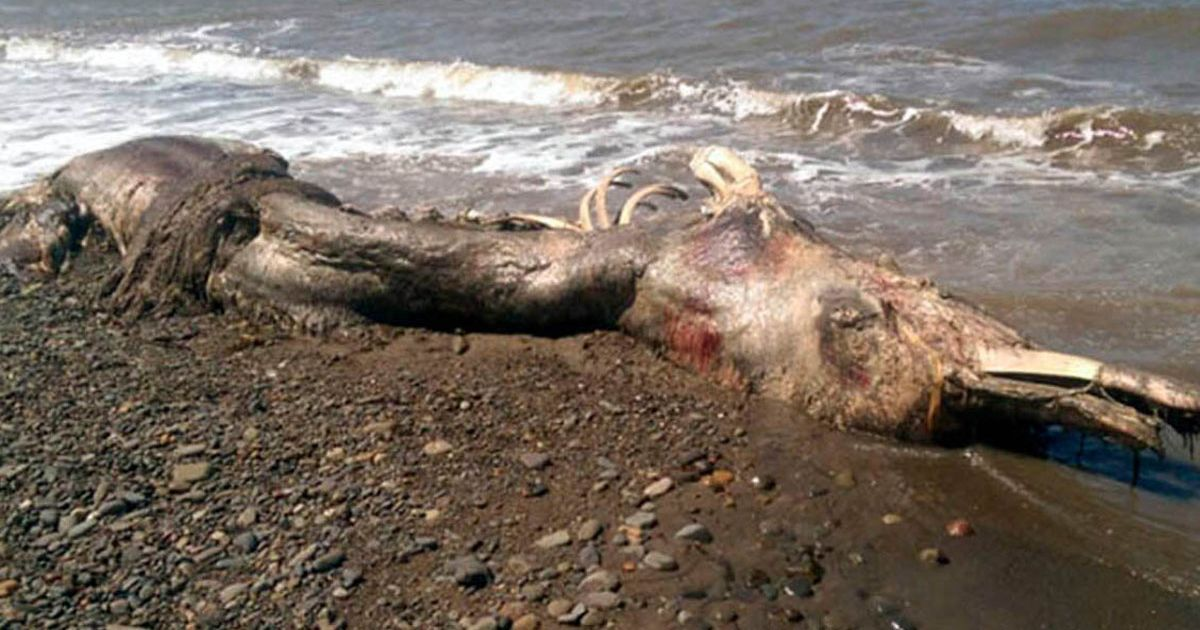 Marine biologists have been puzzled by the creature, with pictures causing a sensation on Russian social media