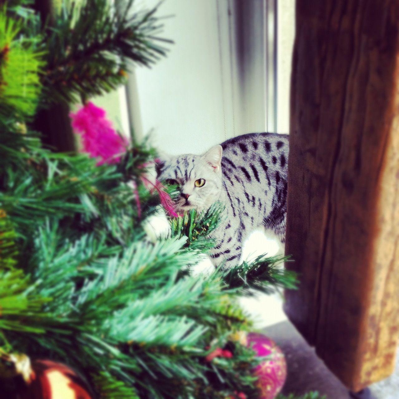 purina tidy cat litter