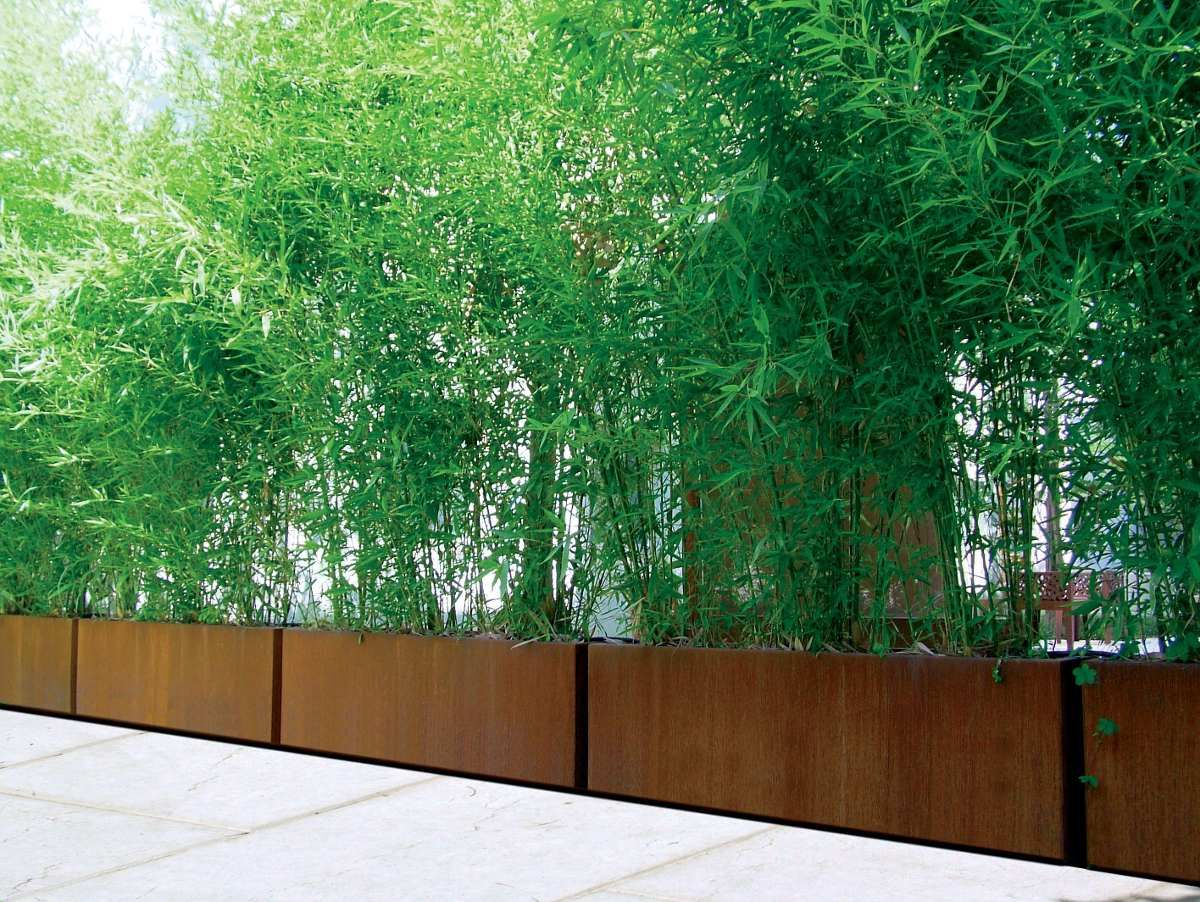 Cercos de ca a de bambu jardineria pinterest ca a - Seto de bambu ...