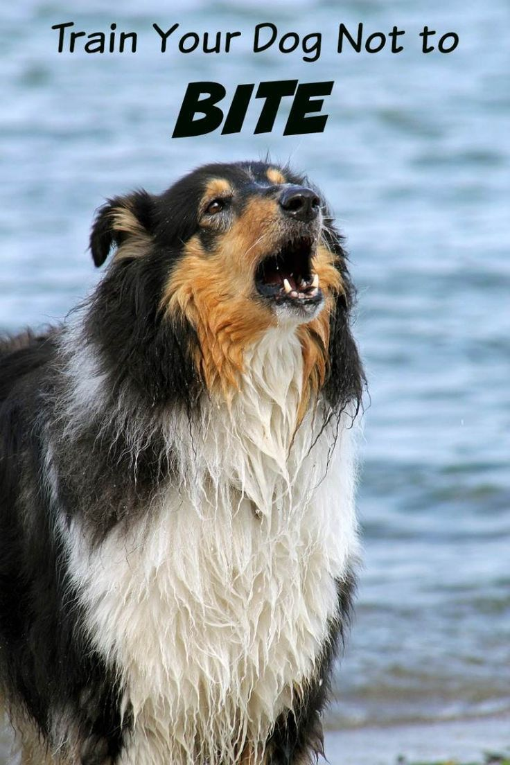Dog Training Tips to Teach Your Dog to Stop Biting Dog