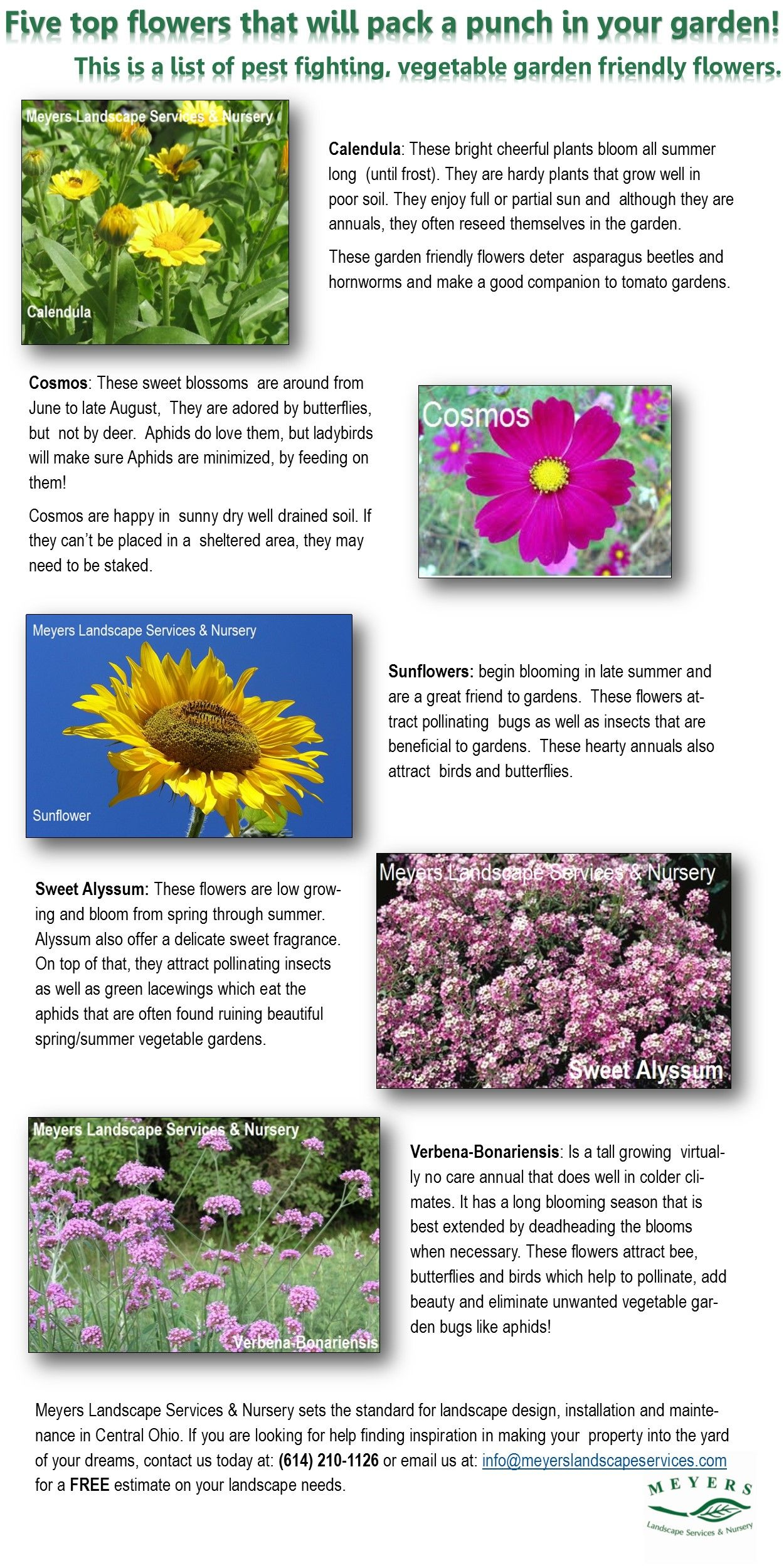 Ever Wonder If There Are Ways To Deter Pesky Insects And