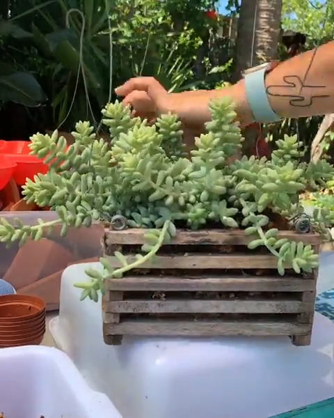 Photo of Succulent DIY Creations! ?✨