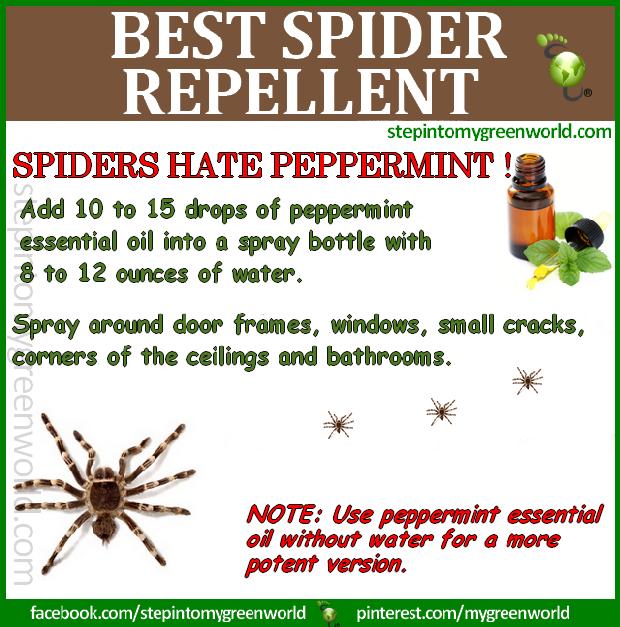 Healthy Living Diy Peppermint Spider Repellent Spiders Repellent Repellent Natural Spider Repellant