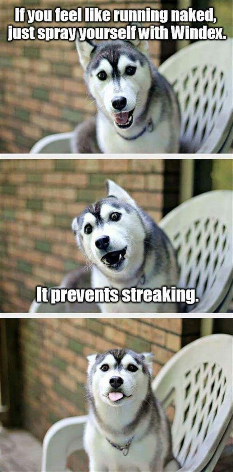 4c268ffe8a92887d35e13aa359c2a037 cute dog corny adorable husky humor joke meme funny bark tongue,Dog Running Meme