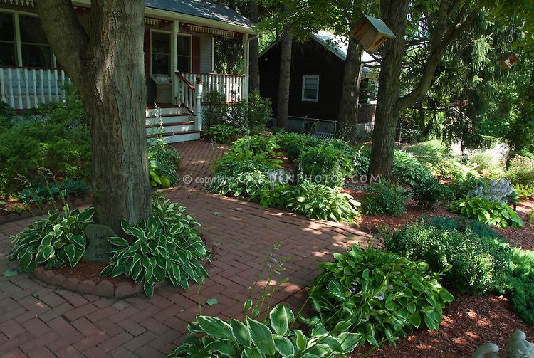 hostas and plantings under trees
