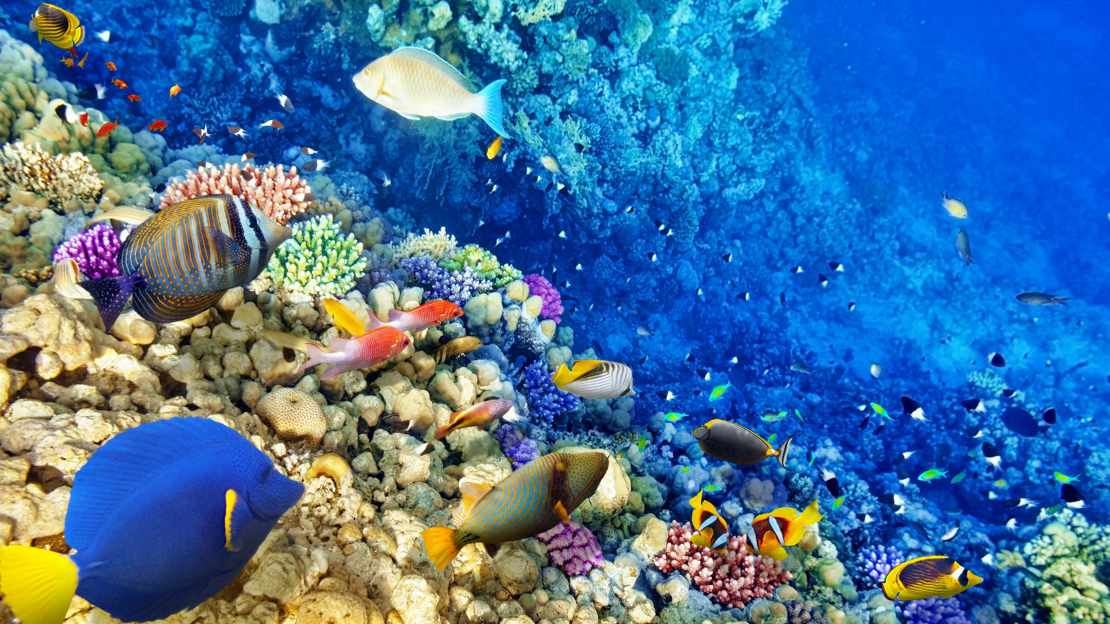 Underwater Reef Wallpaper Hd | www.pixshark.com - Images ...