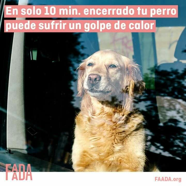 Y los golpes de calor pueden ser mortales.  ¡Comparte para que este verano nadie deje a su perro en el coche!