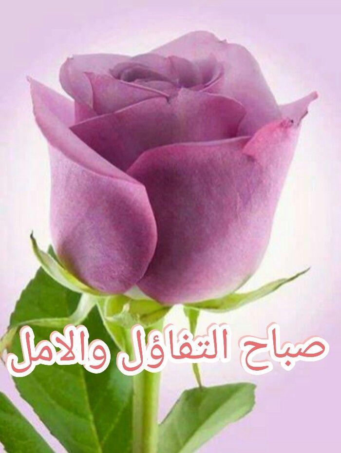 صباح التفاؤل والامل Beautiful Rose Flowers Purple Roses Amazing Flowers